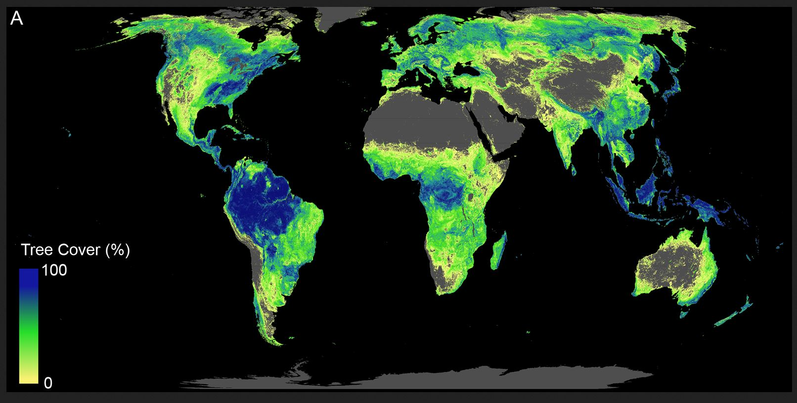 """Planting trees can be """"main weapon against climate change"""" – study ..."""