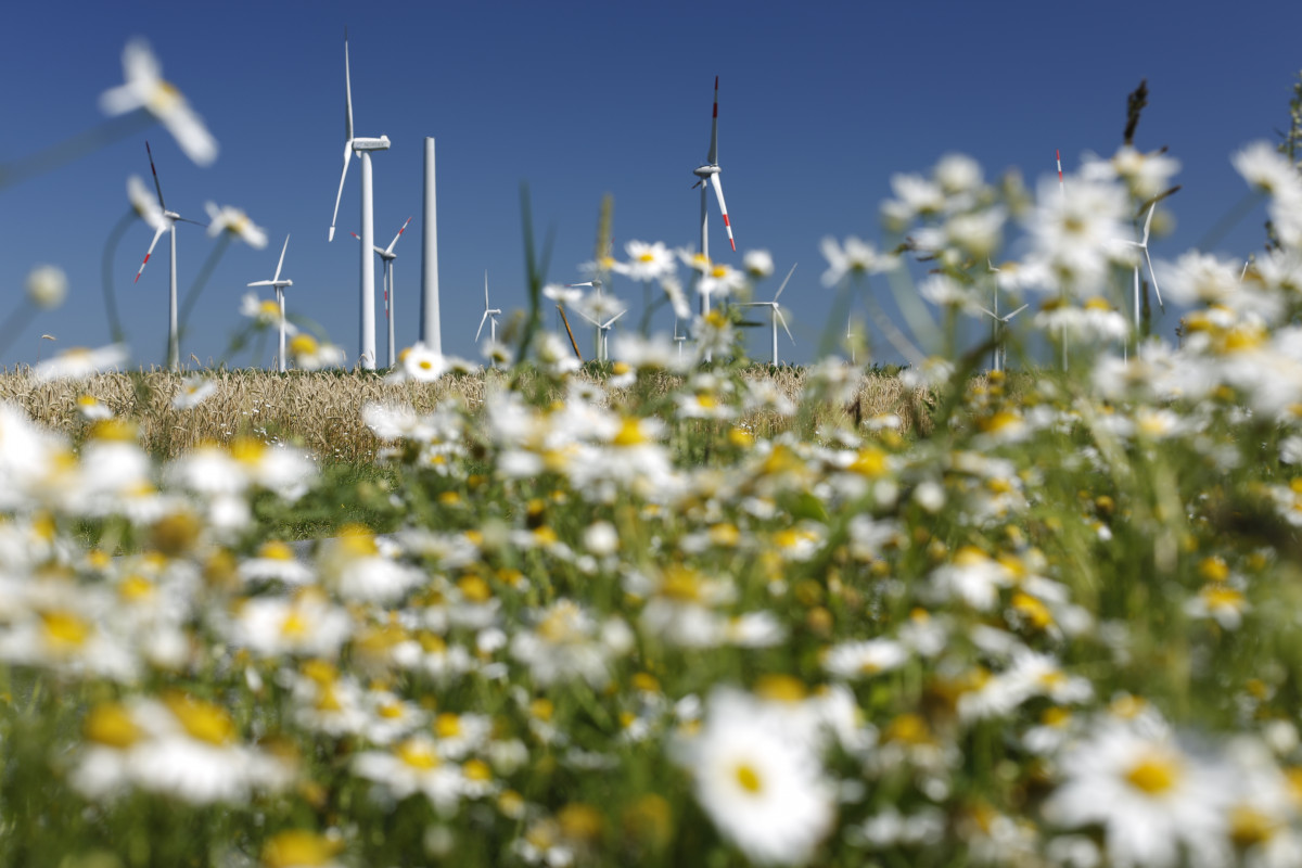 Photo shows wind turbines and flowers in Germany. Source: BWE/Jens Meier.