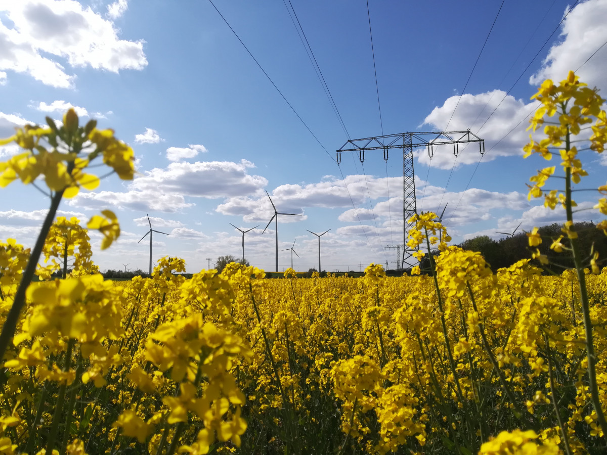 Photo shows wind turbines and power lines and flowers in Germany. Photo: CLEW/Wettengel 2020.