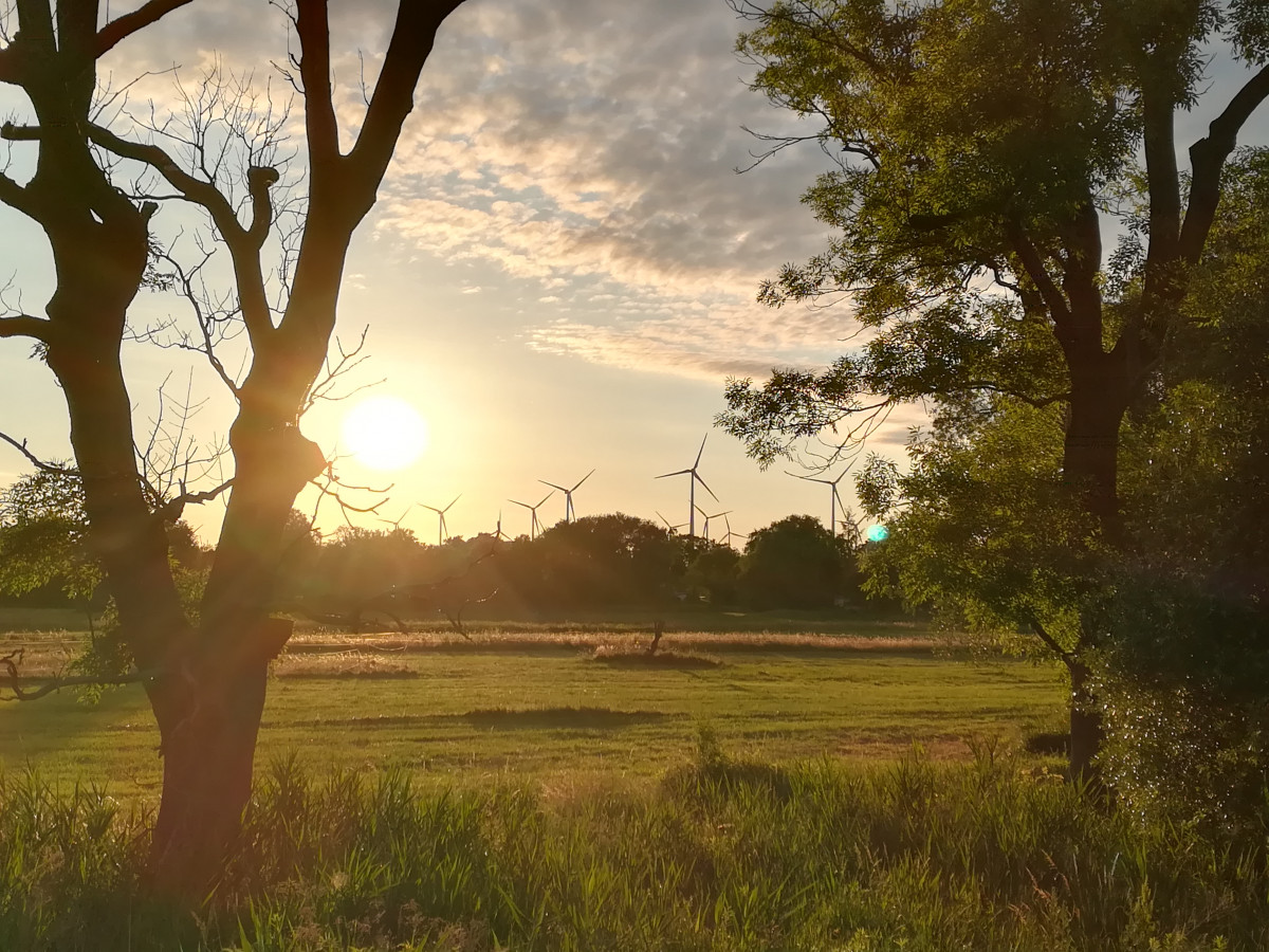 Photo shows wind turbines and trees in German state of Brandenburg and the sunset in summer 2020. Photo: CLEW/Wettengel 2020.
