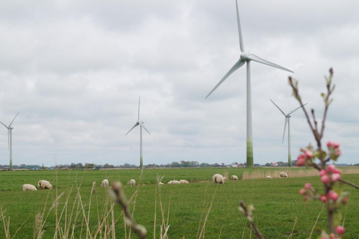 Photo shows wind turbines in Schleswig-Holstein, Germany. Photo: CLEW/Wettengel.