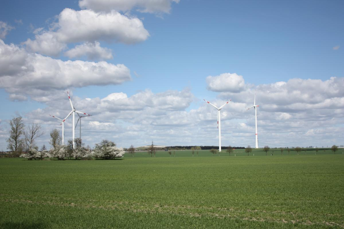 This is a photo of wind turbines in a field.