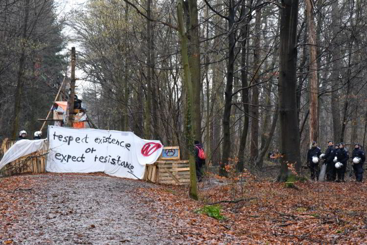 hambacherforst.org