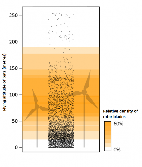 Wind turbine rotors can pose a threat to flying bats. Source: C. Voigt / IZW