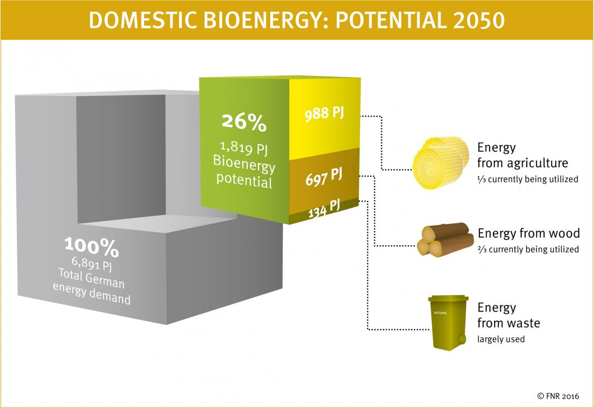 Bioenergy - the troubled pillar of the Energiewende | Clean