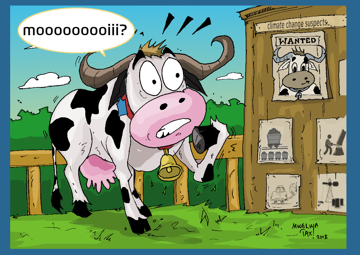 Cartoon of a cow as climate change suspect. Source: CLEW/Musonko.